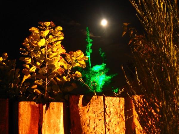 Oświetlenie zewnętrzne Biesiady Weselnej w Kumiale