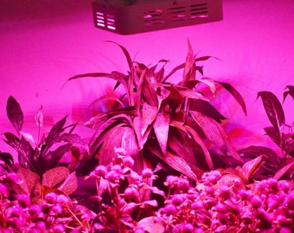 Technologia LED w rośłinności